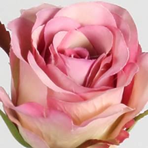 Bilde av Rose mauve