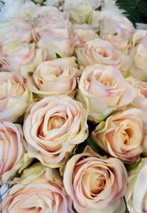 Bilde av Rose cream og pink