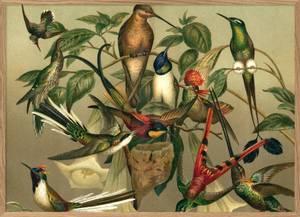 Bilde av Bilde Hummingbirds 70x100