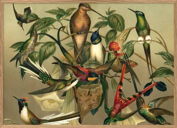 Bilde Hummingbirds 70x100
