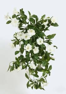 Bilde av Hengepetunia hvit