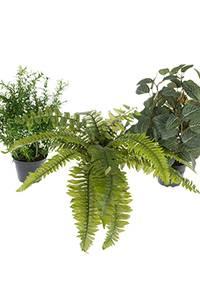 Bilde av Grønnplanter mix 2