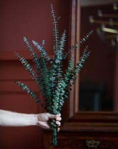 Bilde av Preserved Eukalyptus Baby -
