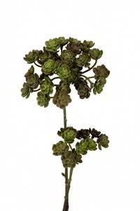 Bilde av Echeveria H:45 cm Grønn