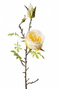 Bilde av Rose H:45 Hvit/gul