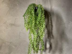 Bilde av Hengeplante 50cm
