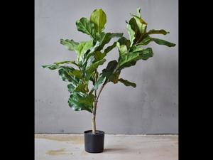 Bilde av Kunstig fiken grønnplante