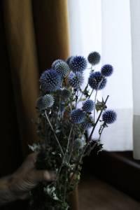 Bilde av Echinops - Blue/