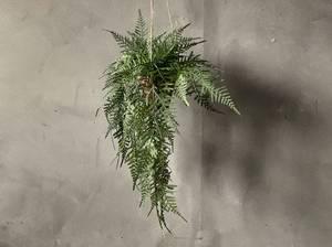 Bilde av Hengeplante bregne 45cm