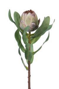 Bilde av Protea lilla H:45cm