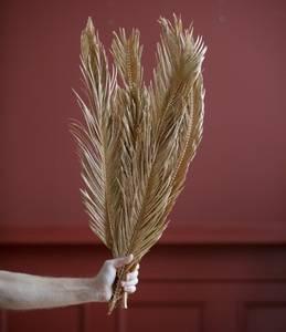 Bilde av Cyca Leaves – Gold H:60-80 cm