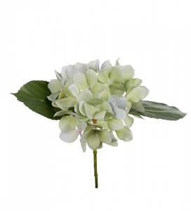 Bilde av Mr.Plant - Hortensia 25cm kustig
