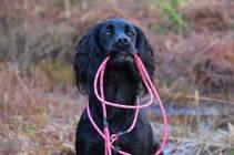 Kobbel til hund oransje og rosa