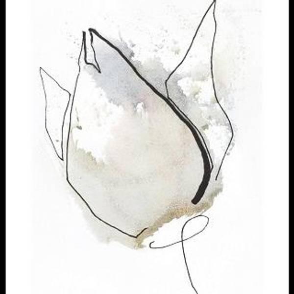Bilde av Tulip