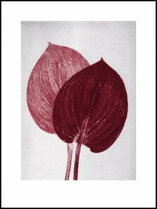 Bilde av Pernille Folcarelli Hosta bordeaux 30x40 trykk