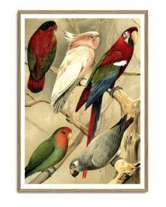Bilde av Parrots Left Side trykk 70x100 The Dybdahl Co.