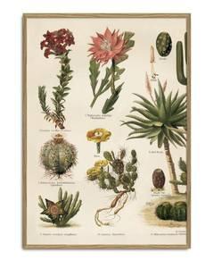 Bilde av Cacti L trykk 50x70 The Dybdahl Co.