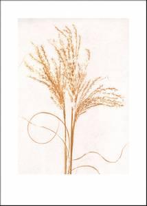 Bilde av Pernille Folcarelli Silvergrass mustard 50x70