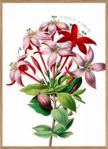 Bilde av Red And Pink Flower plakat 30x40 The Dybdahl Co.
