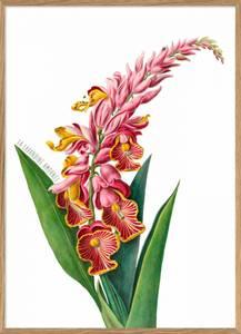 Bilde av Pink Alpinia Flower plakat 30x40 The Dybdahl Co.