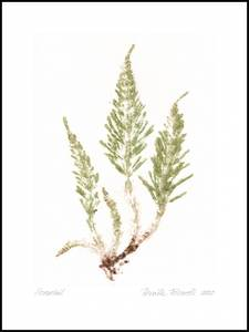 Bilde av Pernille Folcarelli Horsetail crisp green 30x40