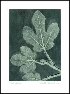 Bilde av Pernille Folcarelli Fig 1 dark teal 30x40 trykk