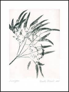 Bilde av Pernille Folcarelli Eucalyptus 2 grenn 50x70