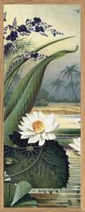 Bilde av Half MEGA Water lily The Dybdahl Co.