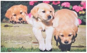 Bilde av Dørmatte Hundevalper