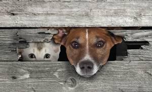 Bilde av Dørmatte Hund & Katt
