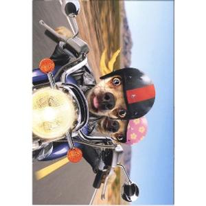 Bilde av Kort Biker dogs....
