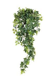 Bilde av Murgrøna i potte Lengde 85 cm