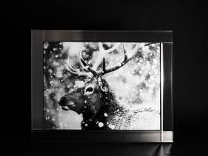 Bilde av Bilde Hjort Glassprint/speil
