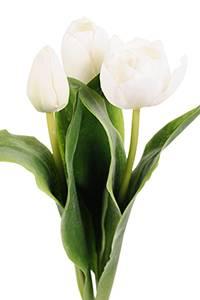 Bilde av Tulipan Hvite H 36 cm