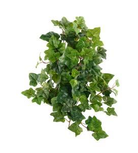 Bilde av Murgrøna i potte 50 cm