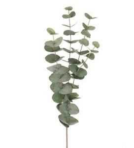 Bilde av Euacalyptus stilk H 60 cm
