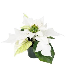 Bilde av Julestjerne hvit mini H 10 cm
