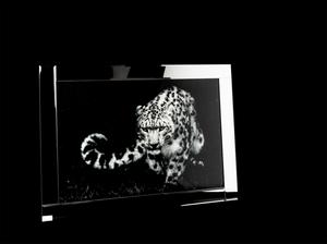 Bilde av Bilde leopard m speil ramme