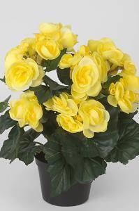 Bilde av Begonia gul i potte