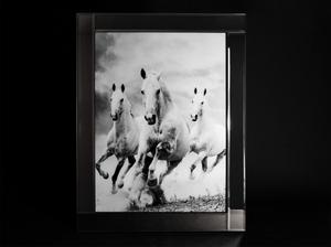 Bilde av Bilde. Hester glassprint