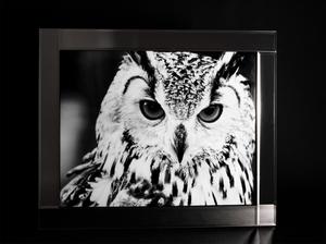 Bilde av Bilde Ugle Glassprint