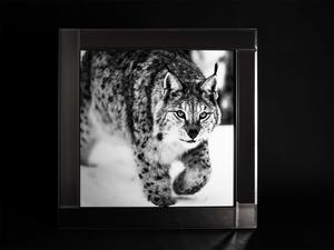 Bilde av Bilde Gaupe glassprint