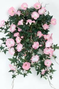 Bilde av Blomst for dagen rosa i potte