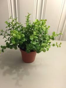 Bilde av Grønne miniblomster