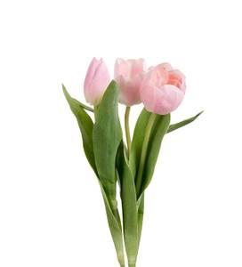 Bilde av Tulipan Rosa H 36 cm
