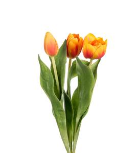 Bilde av Tulipan Gul/orange H 36 cm