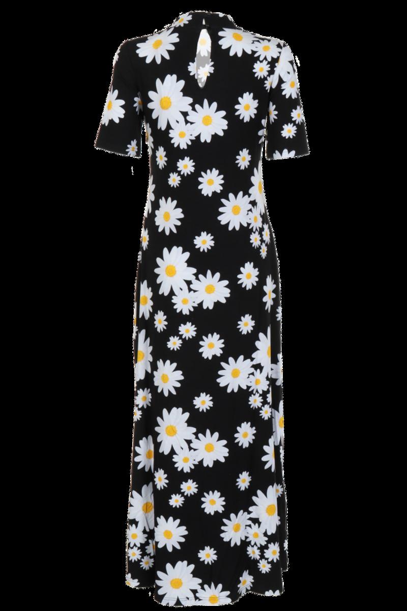 Argyranthemum kjole D51
