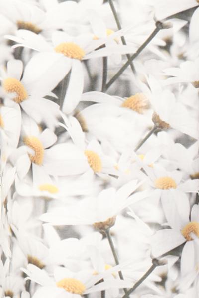 Bilde av Argyranthemum hvit kjole D5