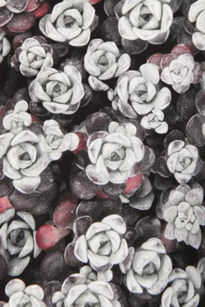 Bilde av Crassula grå kjole D5
