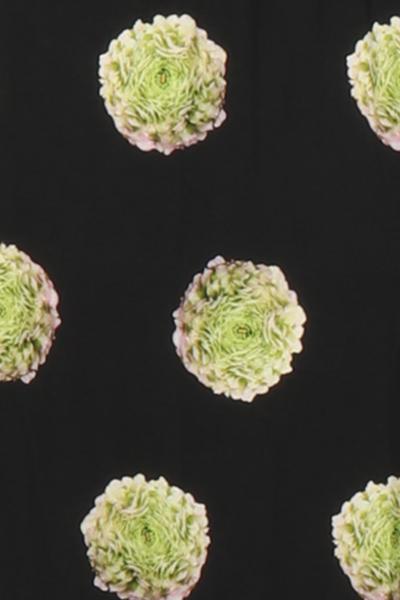 Bilde av Ranunculus kjole D16